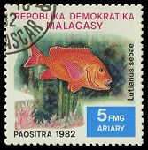 Malagasy - Circa 1982:stamp Shows Image Of A Lutianus Sebae, Circa 1982