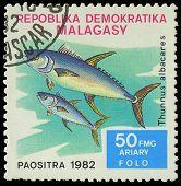 Malagasy - Circa 1982:stamp Shows Image Of A Thunnus Albacares, Circa 1982