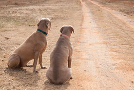 picture of track home  - Two dogs waiting by a driveway for someone to come home - JPG