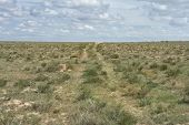 image of groundwater  - Groundwater road in the desert steppe noon - JPG