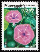 Postage Stamp Nicaragua 1985 Morning Glory, Flowering Plant
