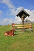 Wooden Cross And Cow, Velika Planina, Slovenia
