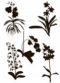 Orchids Silhouette