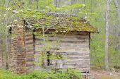 Bucolic Cabin
