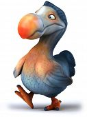 stock photo of dodo  - Dodo - JPG