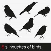 Vector illustration silhouettes of birds