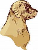 Dog Head - Bloodhound Hand Drawn Illustration - Sketch In Vintage Style
