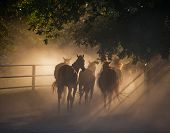 foto of husbandry  - herd of horses back on the dusty village road - JPG