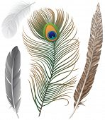 Close-up of 4 bird feathers