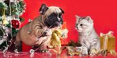 stock photo of christmas puppy  - kitten and puppy - JPG