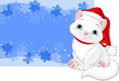 Christmas cat near blizzard background