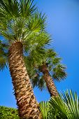 Green palm tree top over blue sky