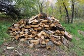 firewood heap in autumn forest