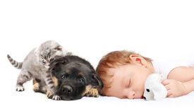 stock photo of toy dogs  - Sleeping Baby Boy with toy dog - JPG