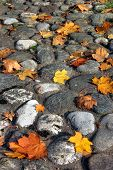 Autumn leaves on stone'spath
