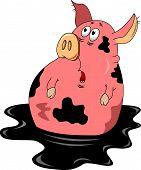 Surprised Pig