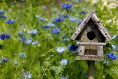 Birdhouse Among The Flowers