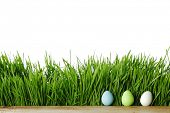 Painted Easter eggs hidden in the grass, isolated on white with copy space