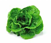 picture of romaine lettuce  - Fresh green cos vegetable isolated on white background - JPG