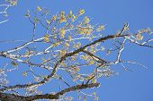 Bare Tree Limbs With The First Growth Of Spring