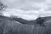 Long Tall Wild Grass And Bogland Mountains Toned Blue