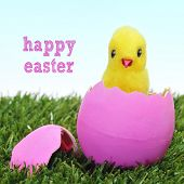a teddy chick emerging from a hatched pink easter egg on the grass and sentence happy easter