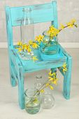Beautiful Forsythia blossom in transparent jars on grey wall background