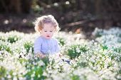 Beautiful Curly Toddler Girl Playing With First Spring Flowers In A Sunny Morning Park