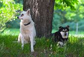 foto of stray dog  - Stray dogs in the city park  - JPG