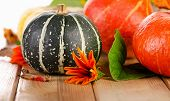 Colorful Pumpkins  With Fall Leaves And  Flowers