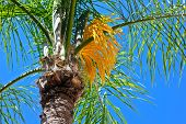 A flowering palm tree.