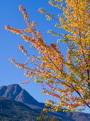 Fall Colors In Salmon Arm
