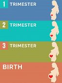 Pregnancy Stages. Infographic.