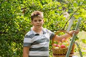 Boy with  basket of apples and a ladder