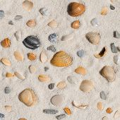 Shells on the sand