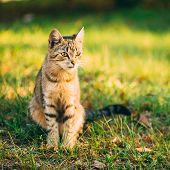 Cute Tabby Gray Cat Kitten Pussycat