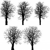 set of different winter trees