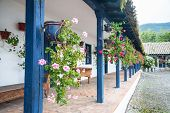 stock photo of hacienda  - Flowers in pots - JPG