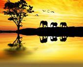african reflexes