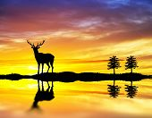 reindeer looking in the mirror of the lake