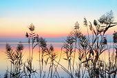 through Lake Shore plants