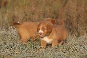 Amazing Puppies Of Nova Scotia In Soft Rime