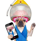 Dog At The  Hairdressers Selfie