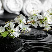 Blooming Twig Of Plum, White Towels On Zen Stones With Ripple Reflection Water, Spa Background, Clos