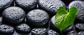 Beautiful Spa Still Life Of Green Leaf Calla Lily, Ice And Lilac Candles On Zen Basalt Stones With D