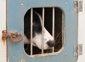 foto of sled-dog  - Sled Dog Sits Inside Dog Truck  - JPG
