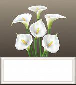Calla lily - greeting card.