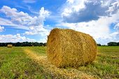 agricultural field with hay rolls at summer time