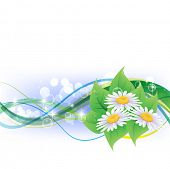 Beautiful camomiles design. Vector of summer background with gradient and radiance.