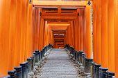 picture of inari  - Fushimi Inari Taisha Shrine in Kyoto - JPG